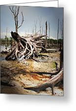 Roots Of Beauty Greeting Card