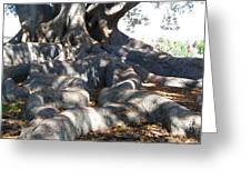 Roots Of Large Fig Tree Greeting Card