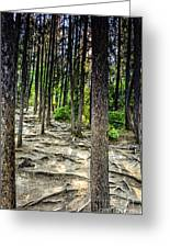 Roots Of Trees Greeting Card
