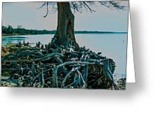 Roots On The Bay Greeting Card