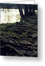 Roots On White River Greeting Card