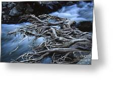 Roots Over Ozark Stream Greeting Card