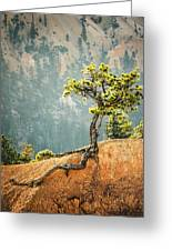 Roots Rock Greeting Card