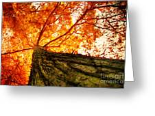 Roots To Branches IIi Greeting Card
