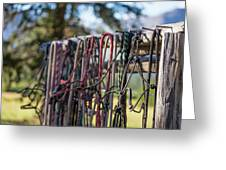 Rope Halters For Horses Lined Greeting Card