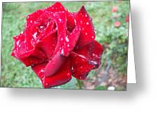 Rosa Rossa Greeting Card by Michel Croteau