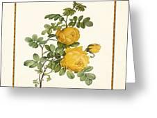 Rosa Sulfurea -yellow Rose  Square Greeting Card