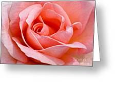 Rosa Summer Lady  Greeting Card
