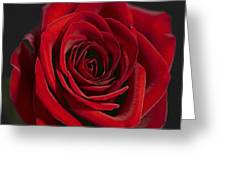 Rose 11 Greeting Card