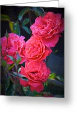 Rose 138 Greeting Card