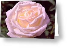 Rose 169 Greeting Card