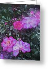Rose 189 Greeting Card by Pamela Cooper