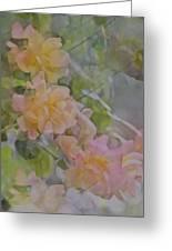 Rose 213 Greeting Card