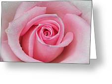 Rose 22 Greeting Card