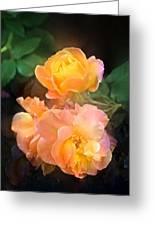 Rose 221 Greeting Card