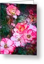 Rose 239 Greeting Card