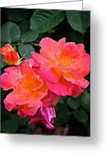 Rose 283 Greeting Card