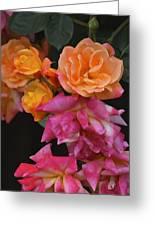 Rose 284 Greeting Card