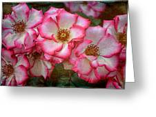 Rose 298 Greeting Card