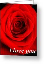Rose 6 I Love You Greeting Card