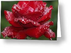 Rose 9 Greeting Card