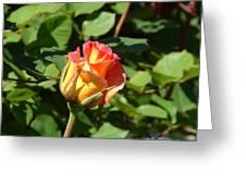 Rose Ablaze Greeting Card