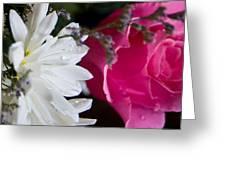 Rose And Daisy Greeting Card by John Holloway