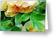 Rose And Leaves On A Rainy Day Greeting Card