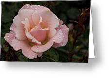 Rose And Rain - Pale Pink Raindrops Greeting Card