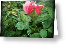 Rose And Rain Drops Greeting Card by Eva Thomas