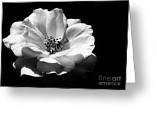Rose Art Greeting Card