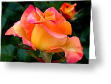 Rose Beauty Greeting Card
