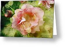 Rose Begonia In Pink Greeting Card