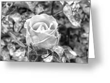 Rose Black Greeting Card
