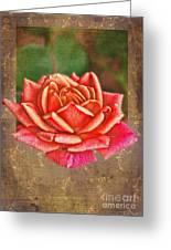Rose Blank Greeting Card Greeting Card