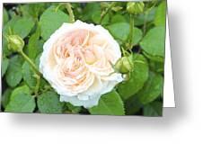 Rose Bloom Greeting Card
