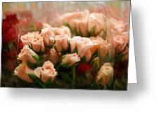 Rose Blush Greeting Card