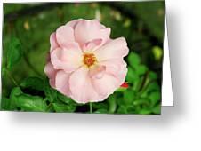 Rose 'botticelli' Greeting Card