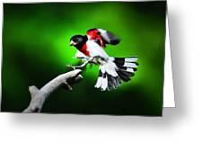 Rose Breasted Grosbeak Landing Greeting Card