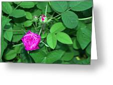 Rose Bud Greeting Card by Michael Sokalski