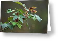 Rose Bush Rain Greeting Card