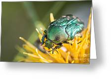 Rose Chafer Greeting Card
