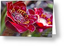 Rose De Porcelaine Greeting Card
