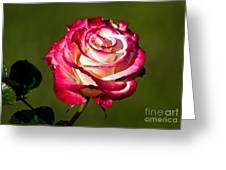 Rose Dick Clark Greeting Card