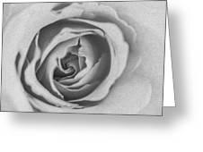 Rose Digital Oil Paint Greeting Card