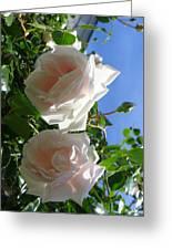Rose Duo Greeting Card