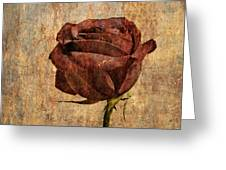 Rose En Variation - S22ct05 Greeting Card