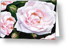 Rose Encounters Greeting Card