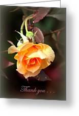 Rose - Flower - Card Greeting Card