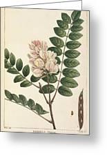 Rose Flowering Locust Greeting Card